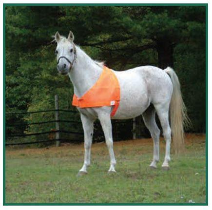 Horse with Blaze Orange Vest
