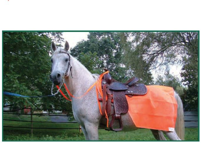 Horse in Saddle with 1/4 sheet
