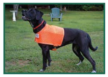 Dog in Bright Orange Vext